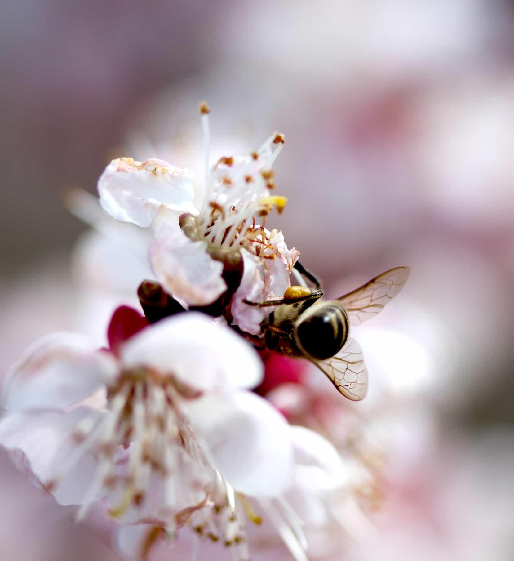 Blütenpollen-2
