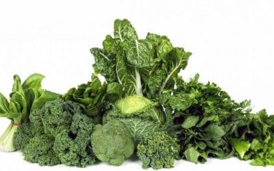 Eiweißhaltige Lebensmittel