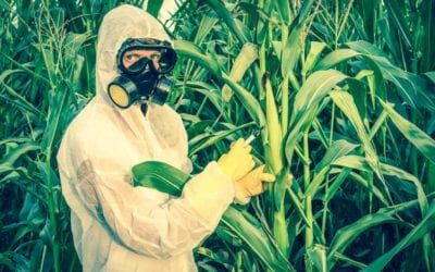 Gentechnik: So machen Sie einen großen Bogen um gentechnisch veränderte Lebensmittel