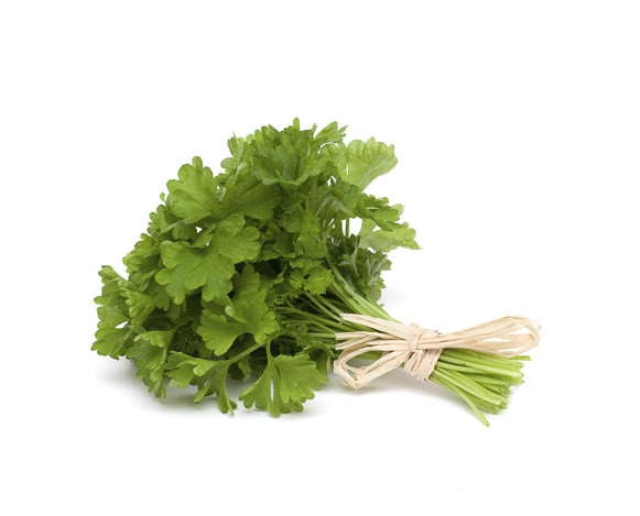 tied fresh parsley on white background