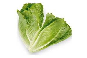 salatkopf-low-carb